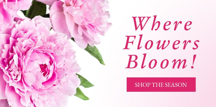 Creative flowers white plains ny best flowers 2018 scarsdale florist flower delivery by colonial village flowers mightylinksfo
