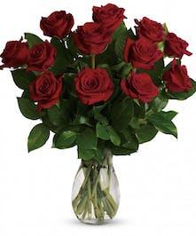 1 Dozen Premium Red Roses