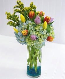 Glass Cylinder of Blue Hydrangea & Bright Tulips