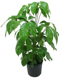 An easy care green floor plant