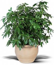 Arbicola Plant Yonkers, NY