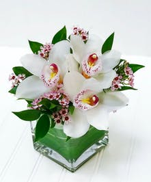 Cymbidium Orchids in a leaf lined glass cube