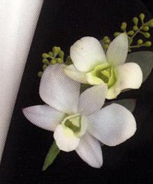 Boutonniere Dendrobium Orchid
