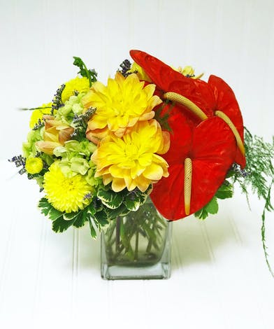 Anthurium & Dahlia in a Modern Square Glass Vase