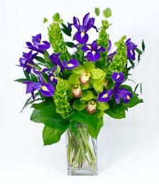 Iris & Orchids