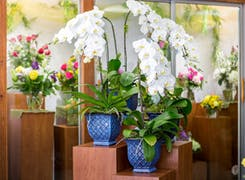 Several lovely white orchids await their new home